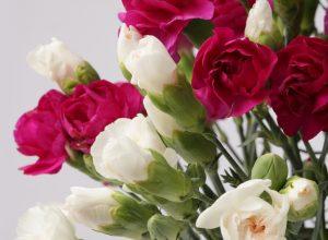 Spedire fiori domicilio, come stupire le persone a cui vuoi bene